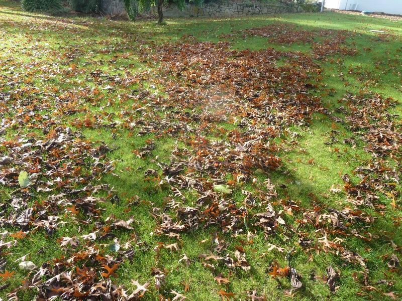 28-feuilles tombées