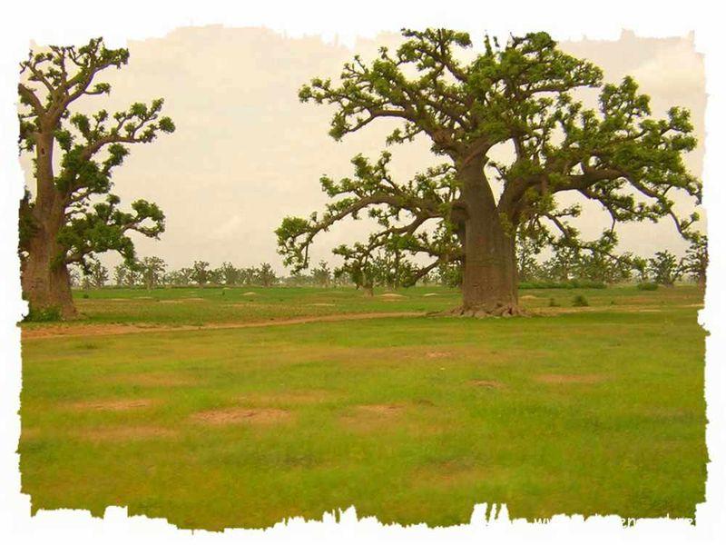 SeckasystemeVerdure-Baobab_rs