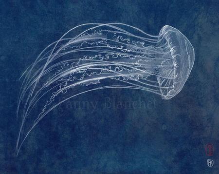 meduseweb