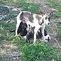 Tit Fille - pauvre chienne abandonnée avec ses 6 bb