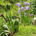 iris & arrosoirs