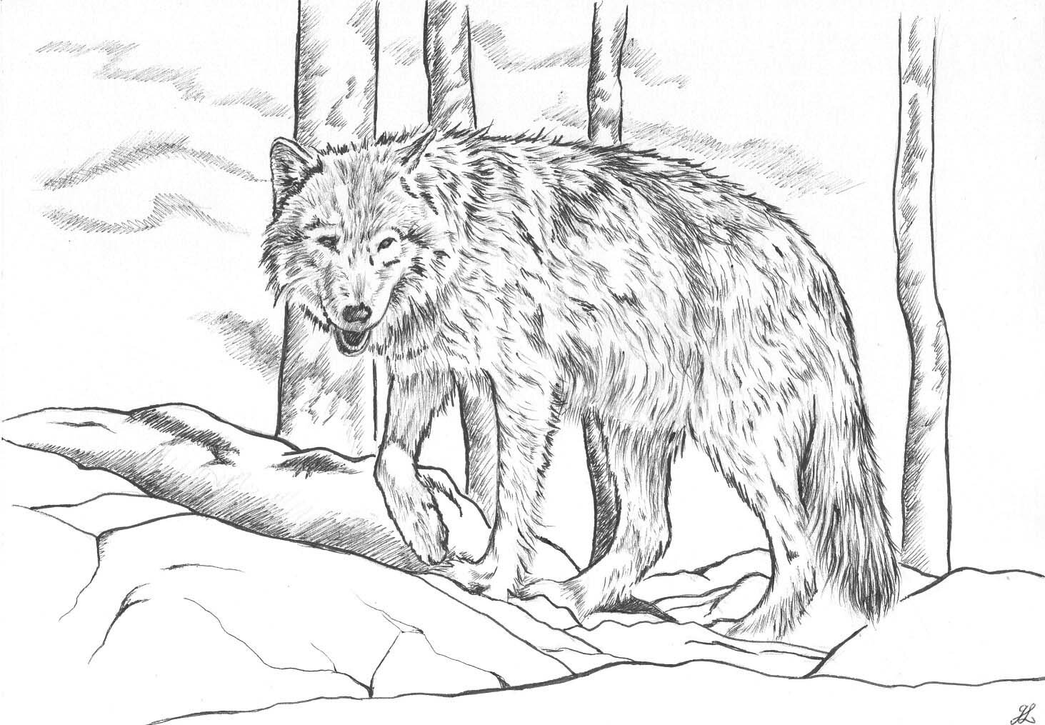 Coloriages dartiste - Coloriage loup ...