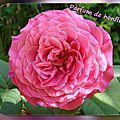 balanicole_2016_02_fevrier_rosiers1_65_parfum de honfleur2