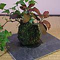 Catalogue plantes d'intérieur