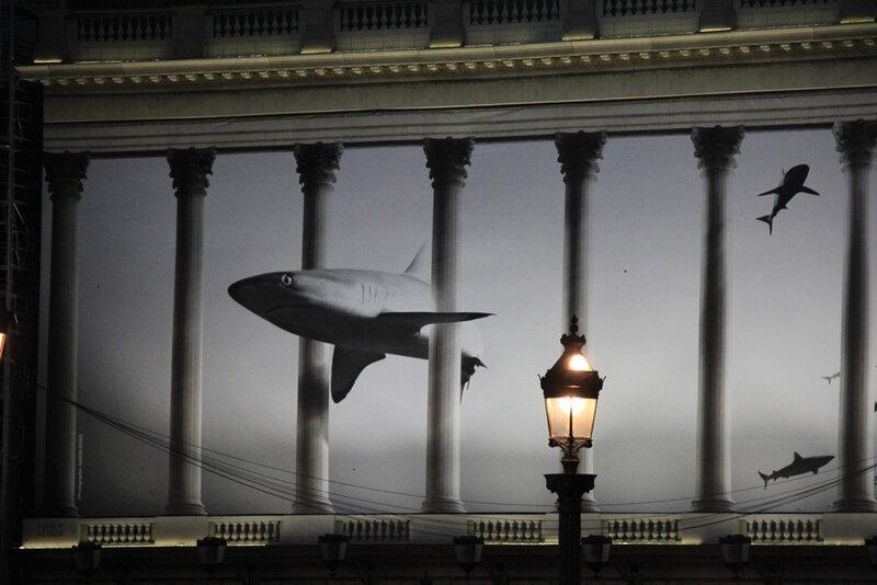 requin_paris