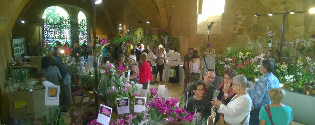 abbaye-fontfroide-narbonne-orchidees