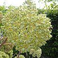 fleurs-de-breche (77)