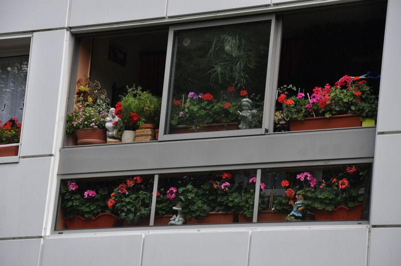 jardins fleuris 0450046