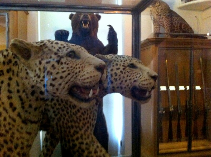 musee de la chasse pantheres léopard