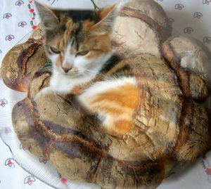 Chat-Couronne
