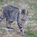2009 03 31 Un chat qui observe