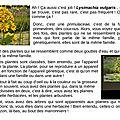 7- lysimachia vulgaris