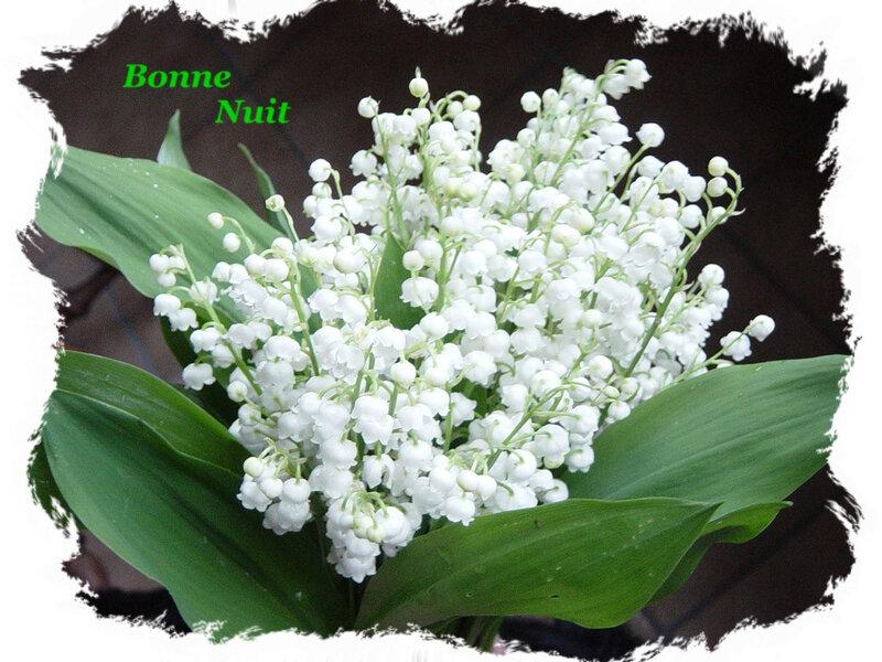 13 1er Mai bon nuit bouquet d Muguet