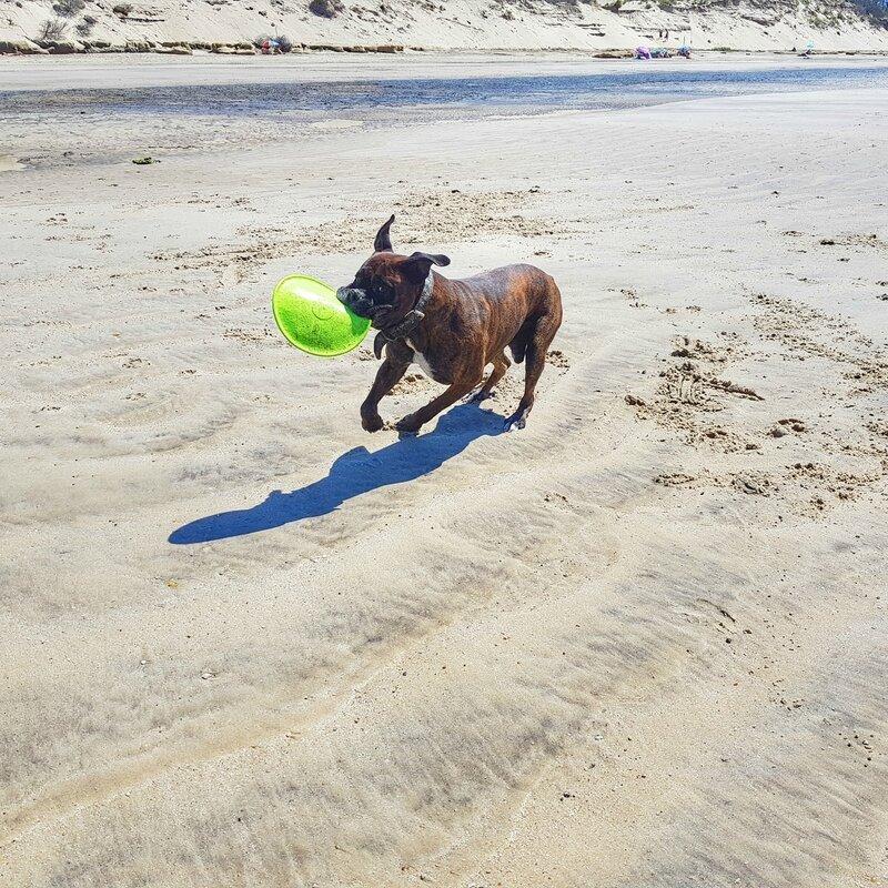 chien-frisbee-plage-boxer