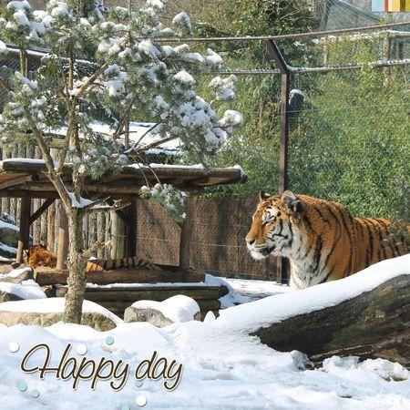 20130313 zoo_neige DP1