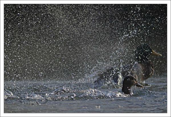 ville lulu canard bain gouttes 4 matin 111112