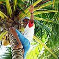L'art d'aller cueillir une noix de coco