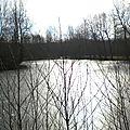 Les étangs du marais de Saône gelés