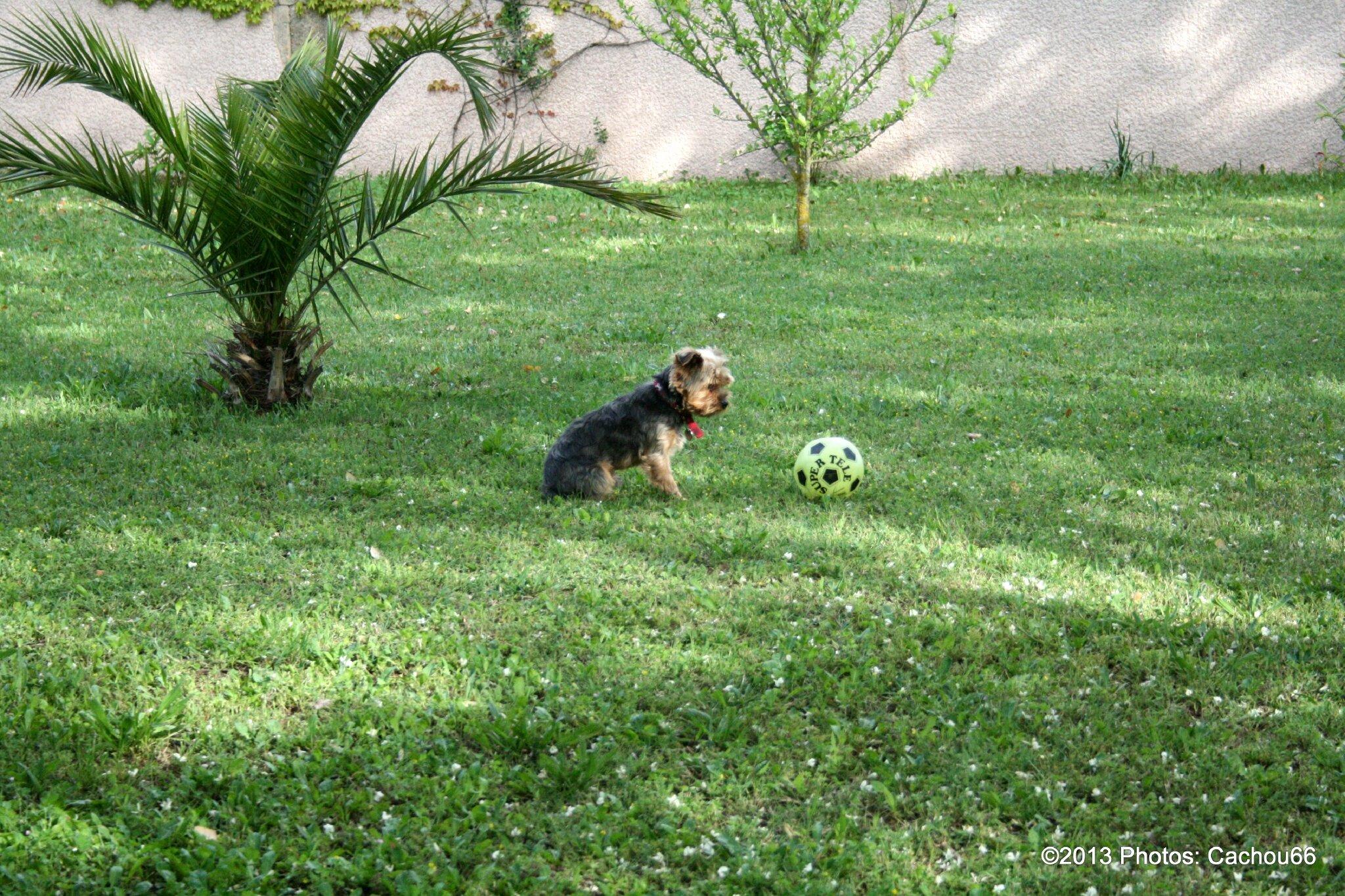 Enzo, notre footballeur