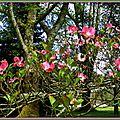 Fleurs de Tulipier 2104152