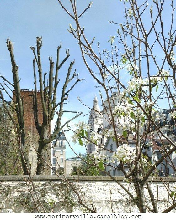Jardin Musée Montmartre3- Marimerveille