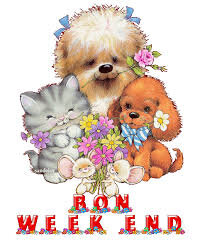 Chien chat week-end