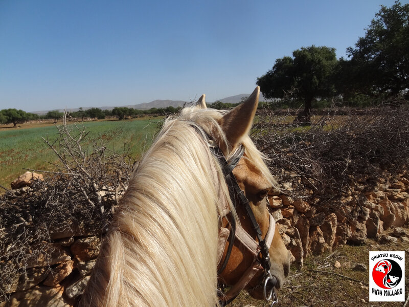 mur cheval