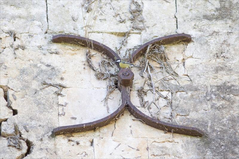 Mur X oiseau mésange 070820 3 ym