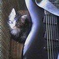 MIO aime bien ma guitare
