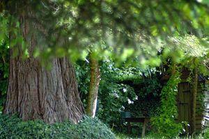 Cabane de jardin Roussines Mai 2011 (1)