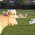 Quel avenir pour notre élevage ?