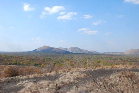 Zambie (415)