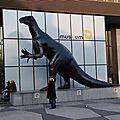 Bruxelles : museum d'histoire naturelle