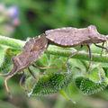 El amor de los insectos