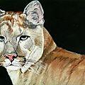 Le cougar - Huile 24 x 16 - 2 décembre 2008