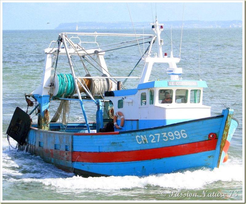 Retour de pêche (5)