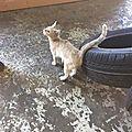 Orianne chatonne 3 mois arrivée ds un garage de réparation