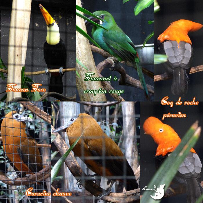 Parc des oiseaux 3