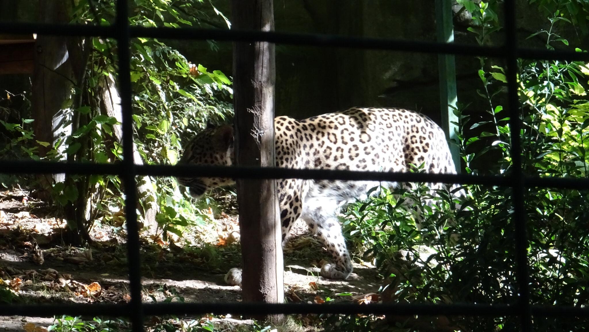 ZooParc de Beauval 8
