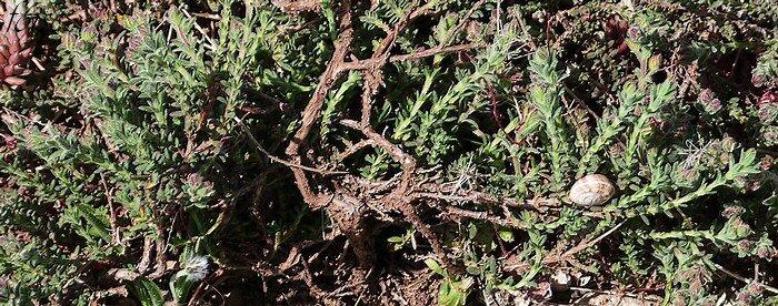 plante ligneuse à la base