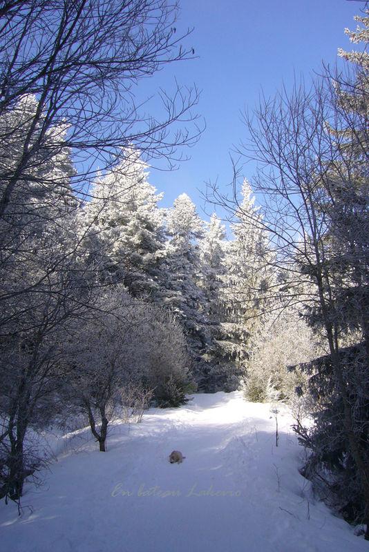 Janvier2009 017