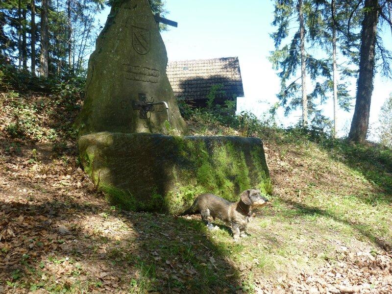 strohbach (17)