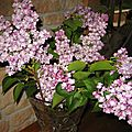 BOUQUET DE LILAS 4