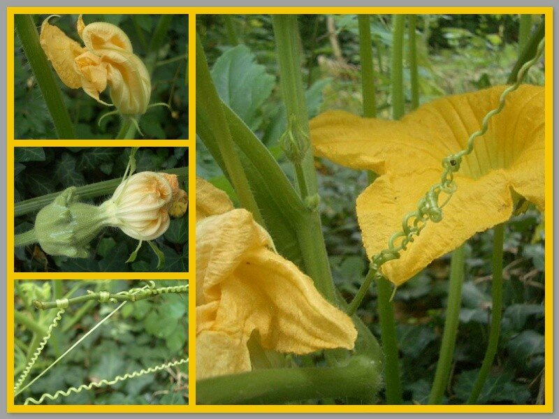 Coucourges__1_