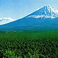 La forêt d'aokigahara