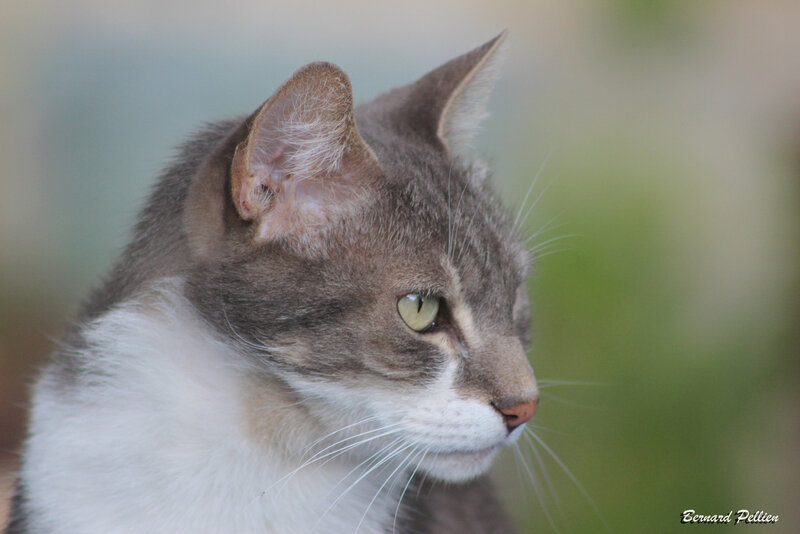 20201018_faune_chat_04