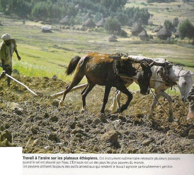 travail à l'araire en Ethiopie