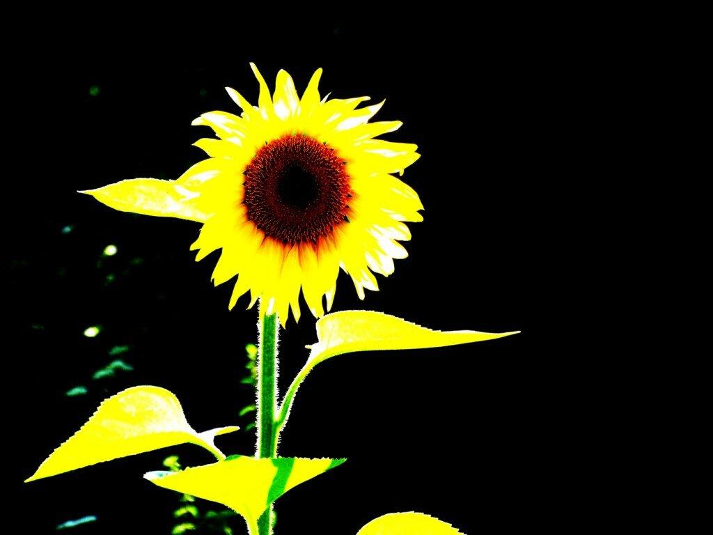 du soleil et encore du soleil