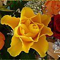 Bouquet de roses 5c