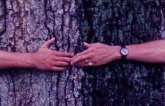 arbre_Anne_DD_d_tail